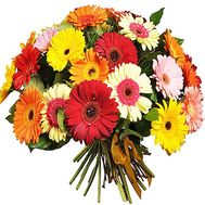 51 gerberas - flowers and bouquets on 7roz.lviv.ua