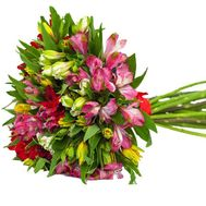 Bouquet of 25 alstromeries - flowers and bouquets on 7roz.lviv.ua