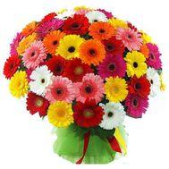 Buy 101 gerberas - flowers and bouquets on 7roz.lviv.ua
