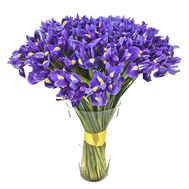 Buy 101 iris - flowers and bouquets on 7roz.lviv.ua