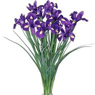 A small bouquet of irises - flowers and bouquets on 7roz.lviv.ua