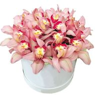 Pink orchids in a box - flowers and bouquets on 7roz.lviv.ua