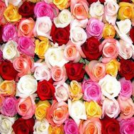 Multicolored roses per piece - flowers and bouquets on 7roz.lviv.ua