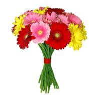 Bouquet of 25 gerberas - flowers and bouquets on 7roz.lviv.ua