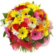Bouquet of flowers from 45 multi-colored gerberas - flowers and bouquets on 7roz.lviv.ua