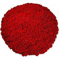 1001 red rose - flowers and bouquets on 7roz.lviv.ua