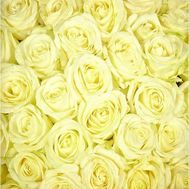 White roses per piece - flowers and bouquets on 7roz.lviv.ua