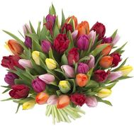Bouquet of 51 tulips - flowers and bouquets on 7roz.lviv.ua