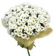 Bouquet of 35 chamomile chrysanthemums - flowers and bouquets on 7roz.lviv.ua