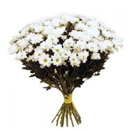 Bouquet of 15 chamomile chrysanthemums - flowers and bouquets on 7roz.lviv.ua