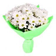 Bouquet of 9 chamomile chrysanthemums - flowers and bouquets on 7roz.lviv.ua