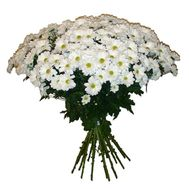Bouquet of 21 chamomile chrysanthemums - flowers and bouquets on 7roz.lviv.ua