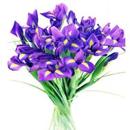 Bouquet of flowers from 21 irises - flowers and bouquets on 7roz.lviv.ua