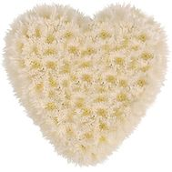 Heart of 25 Chrysanthemums - flowers and bouquets on 7roz.lviv.ua