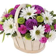 Basket of flowers from 8 chrysanthemums and 9 carnations - flowers and bouquets on 7roz.lviv.ua