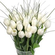 Bouquet of 35 white tulips - flowers and bouquets on 7roz.lviv.ua