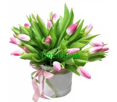 """""""25 pink tulips in a box"""" in the online flower shop 7roz.lviv.ua"""